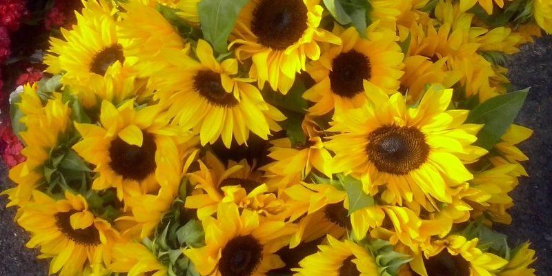 Hot Summer Blooms