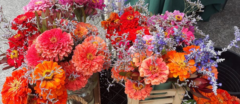 Add a splash of colour and brightness with these flowers