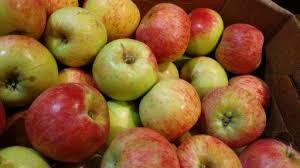The apple season begins……